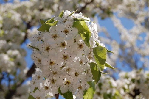 Closeup of flowering tree