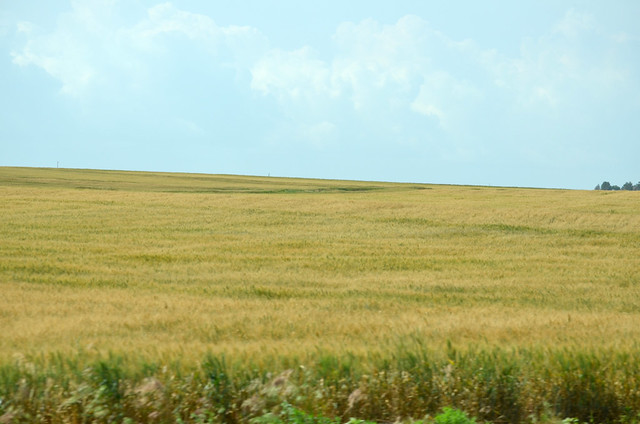 Wheat in Weatherford