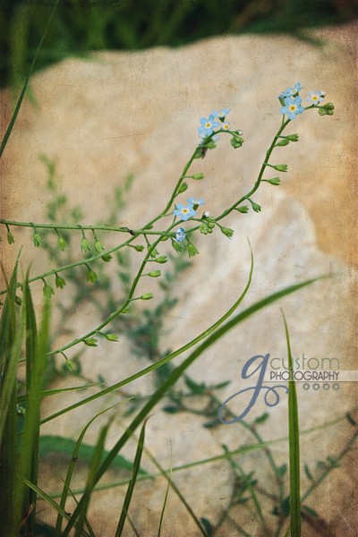 30 - floral 3