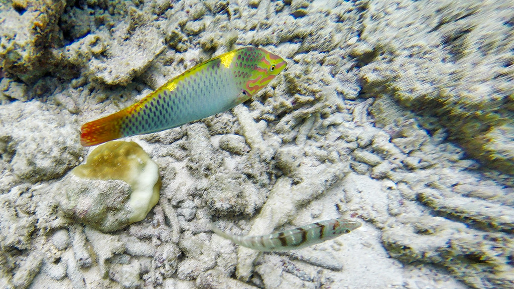 Colorful fish.