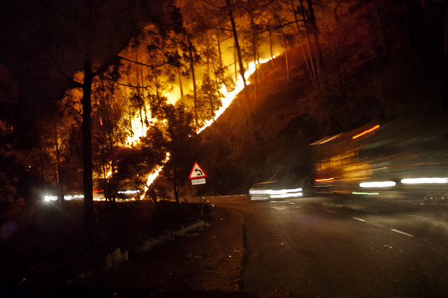 Forest Fires in Shimla Run Lola Run Through the Hills! by Anoop Negi Photography India