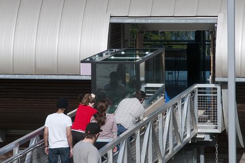 Display Aquarium Arrival