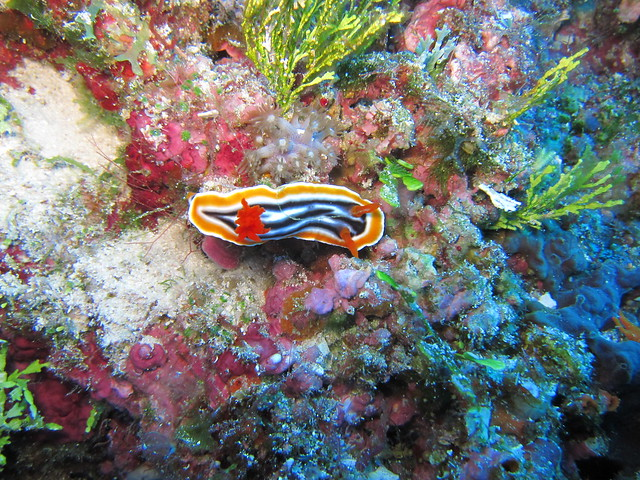 Wakatobi: Nudibranchs (2/6)
