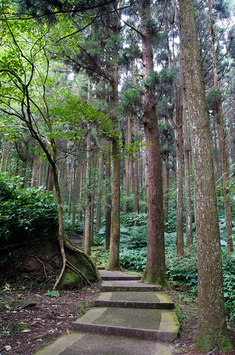 Sitou Forest Park (17 of 57)