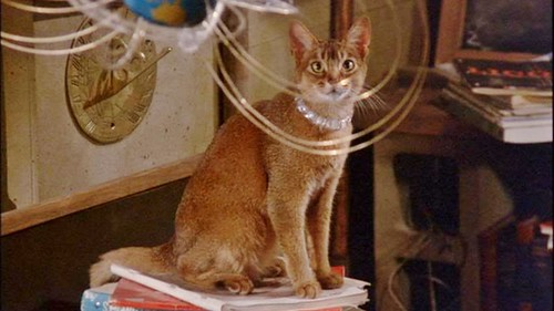 cat-from-outer-space-2