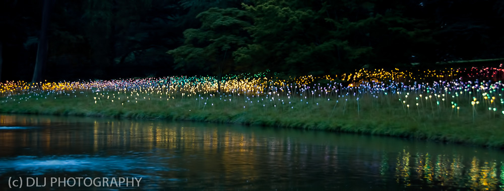 Field of Light at Longwood Gardens