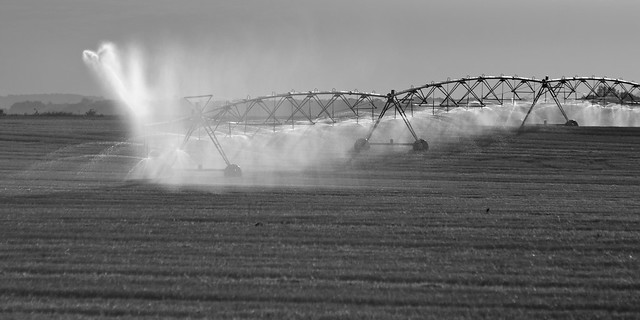 Morning Irrigation B&W