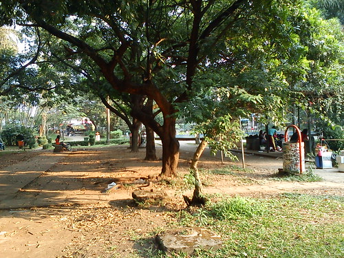 Dry Season at the Park