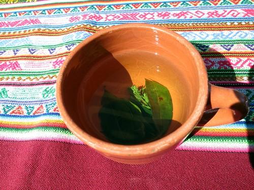 Muña and coca leaf tea