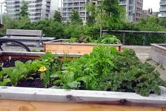 Garden Overfloweth