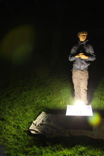 Trapping moths
