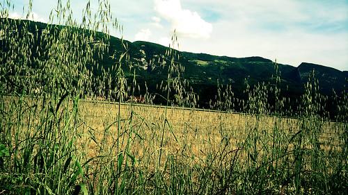 du champ au vercors