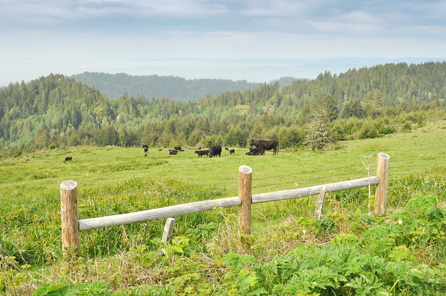 Pastureland in the northern Lost Coast
