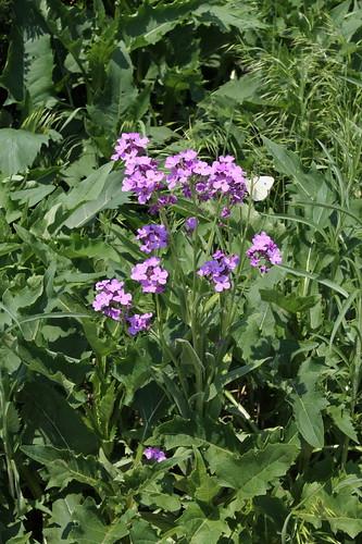 Purple Flower & Butterfly