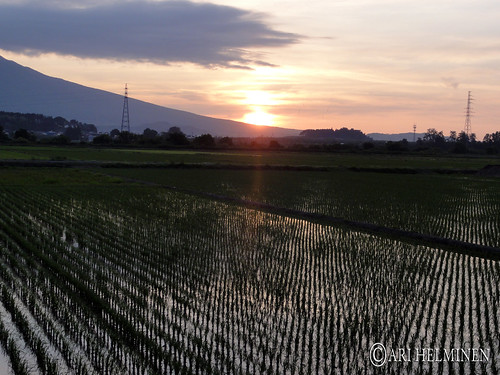 Sunset over the rice pads
