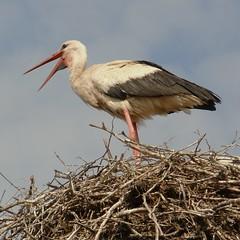 hello-stork