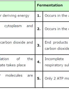 aerobic respiration and fermentation also ncert solutions class biology chapter in plants rh schoolslasem