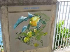 Limones y mas limones!