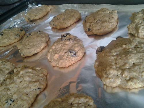 My basic oatmeal raisin cookie