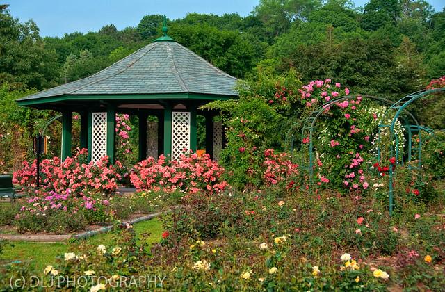 Rose Garden HDR