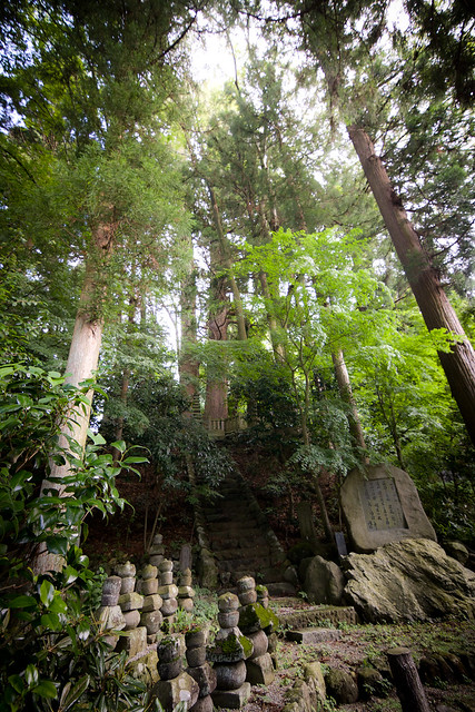 #61 The Giant Cryptomeria of Myouunni Pagoda