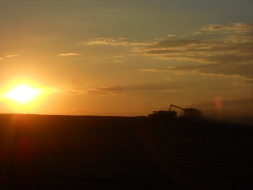 Combine and grain cart silhouette