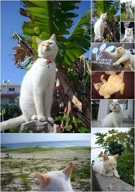 Okinawa 沖繩 2012 相關1