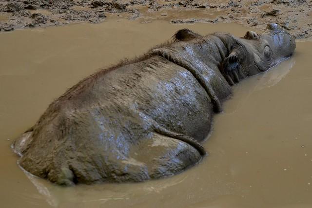 Sumantran Rhino