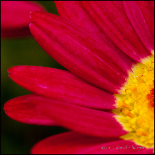 05.31.2012 :: 366/152 ...::... Red and Yellow by Echo9er