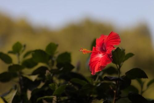 Flower by wwward0