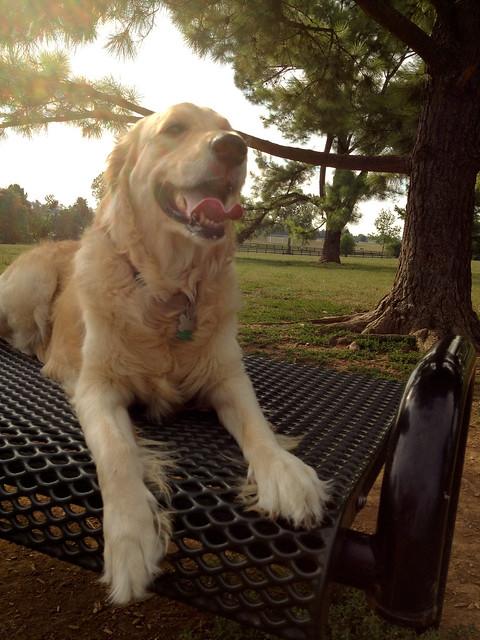 fin at dog park-2