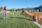 Baby Giraffe at Tanganyika