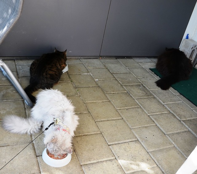 It's tuna time for the cats