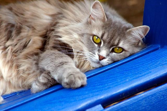 MoMo Cat