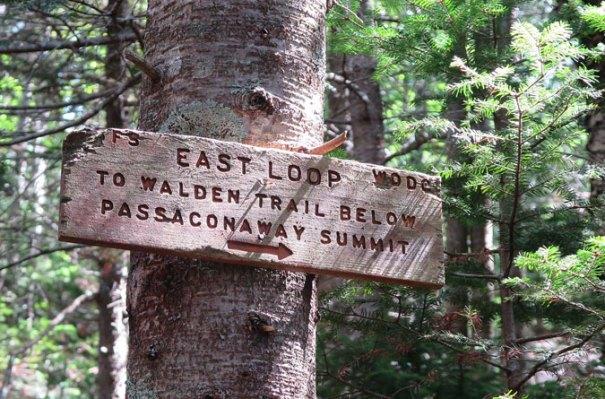 Passaconaway East Trail