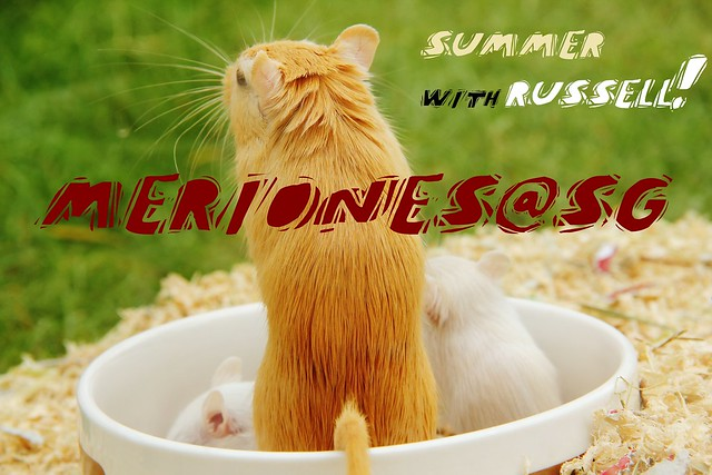 Summer W Russell - I&R 2nd Litter of 4 (6)
