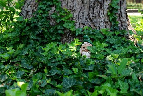 hiding gnome