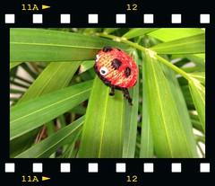 framed ladybird