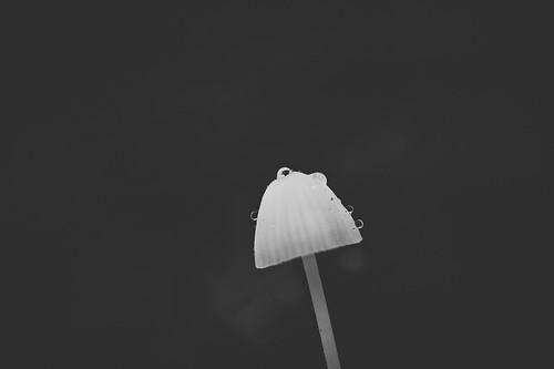 lonely mushroom