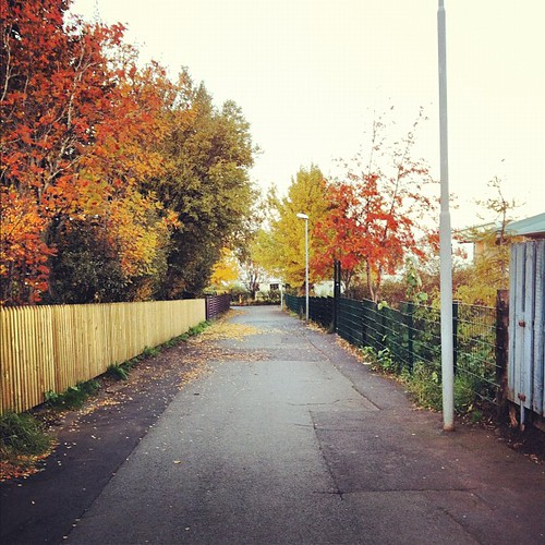 #autumn #fall #red #tree #reykjavik #yellow #green #iceland #path