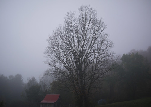 Fog and maple