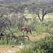 Etosha National Park impressions, Namibia - IMG_3289_CR2_v1