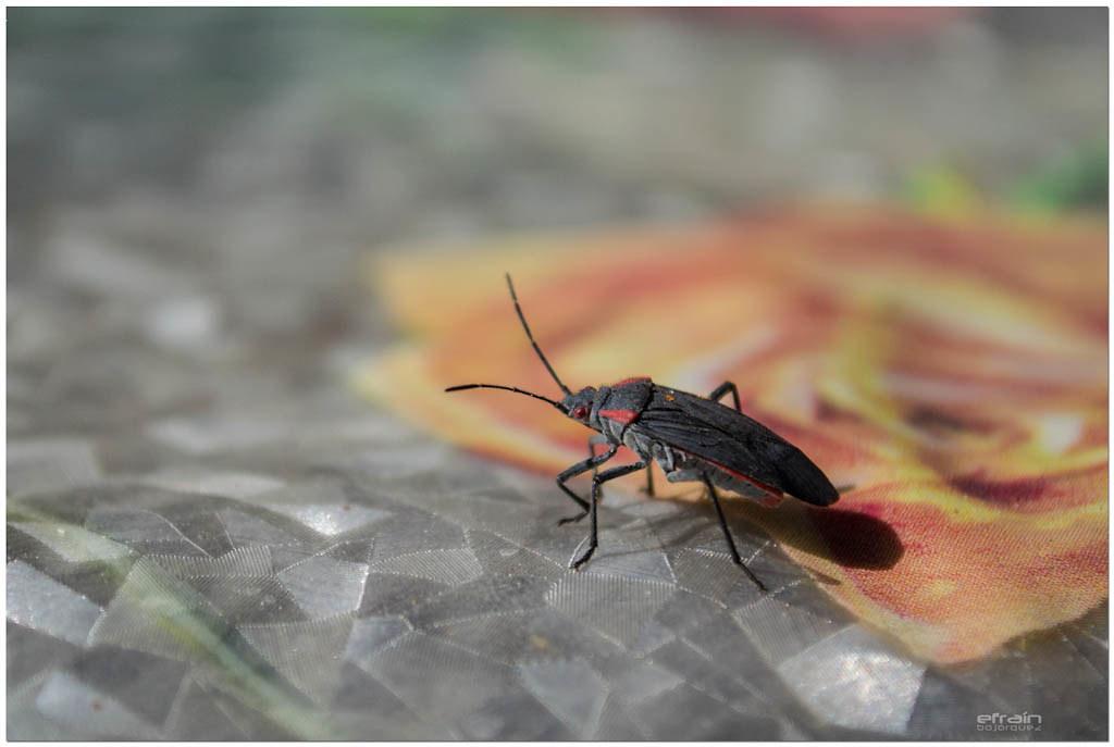 2012-09-09: Shutter bug