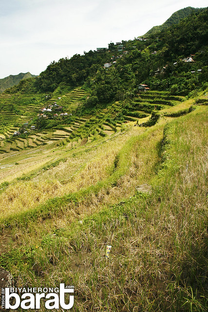 rice paddies in batad ifugao