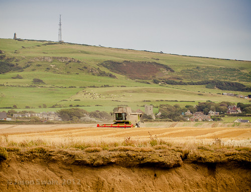 Wheat Harvest in Atherfield