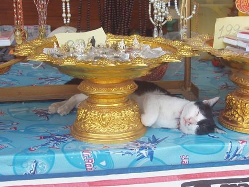 201002190521_Big-Buddha-complex-cat