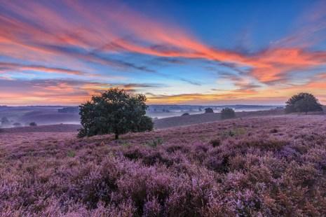 Epic purple rush moment @Posbank #veluwezoom