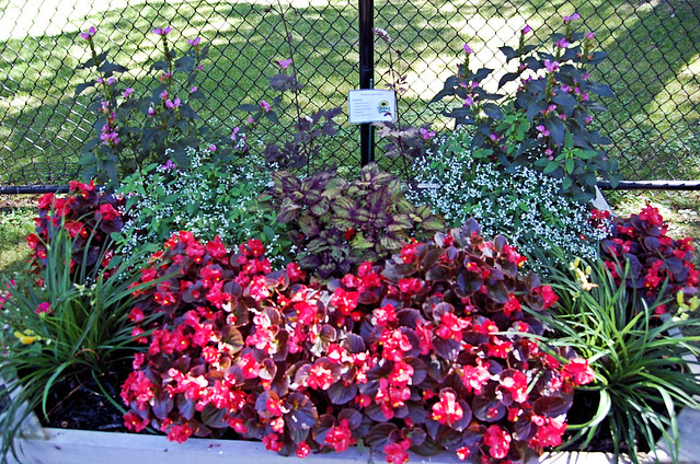 contains flowers of red and pink along with greenery of various shades.