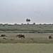 Etosha National Park impressions, Namibia - IMG_3269_CR2_v1