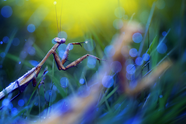 amazing macro photography by Lee Peiling